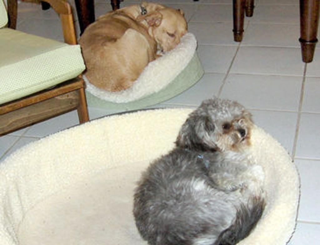 - Jeg VIL ha den lille senga!