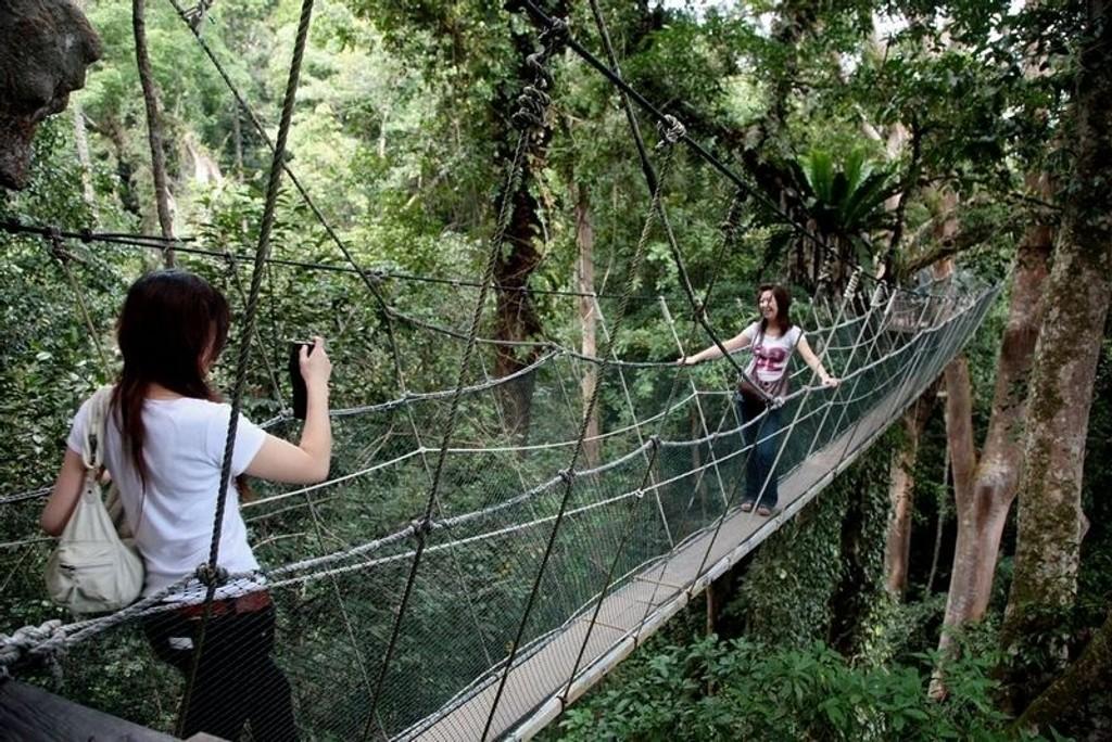 I HØYDEN. 40 meter over jungelstiene utenfor Kota Kinabalu henger en smal og vinglete bro som gir deg et fugleperspektiv på skogen.