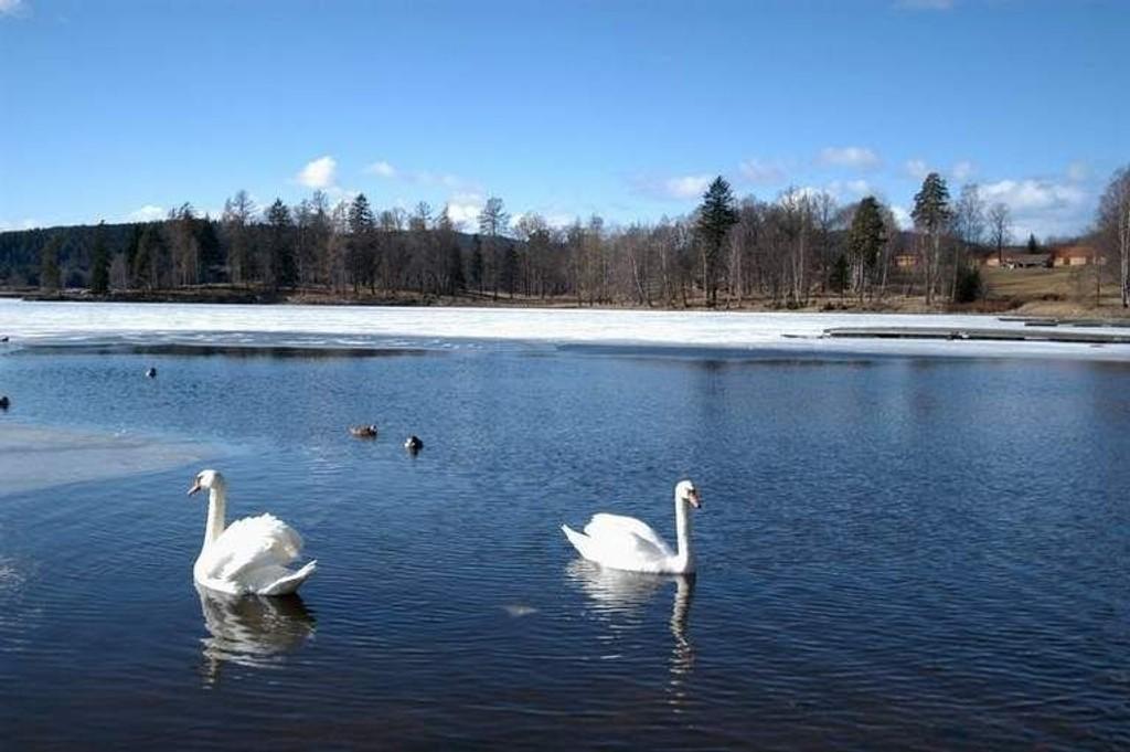 Isen har begynt å smelte mange plasser. (Foto: Elisabeth C. Wang)