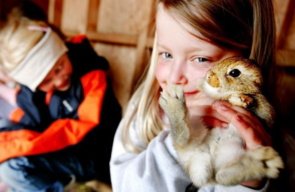 KANINKOS: På Langedrag er det fullt av dyreunger på forsommeren. Frida Tendal (6) liker seg hos kaninungene.
