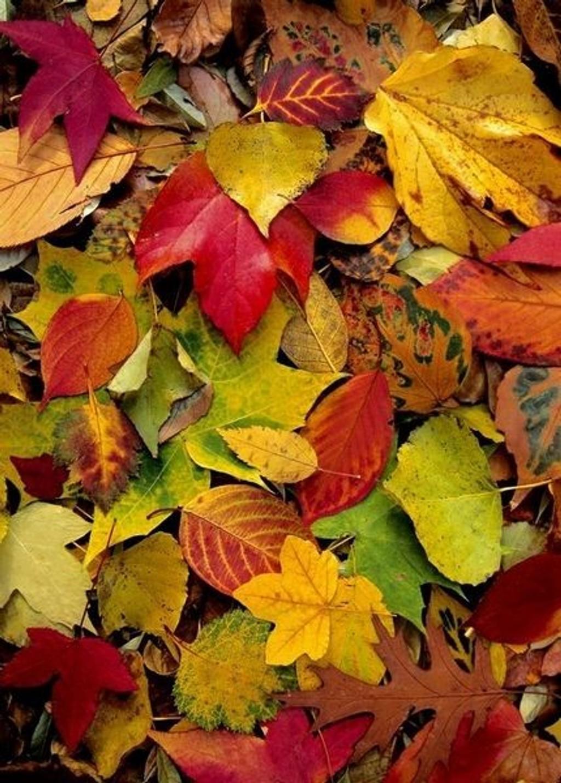 PRYD PÅ BAKKEN: Hvis høsten ikke er for våt, blir bladene et vakkert teppe. (Foto: APB)
