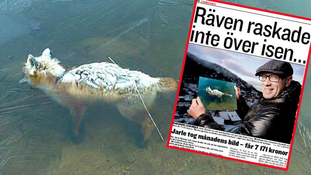 RASKET TIL SEG OVER 7000: Dette bildet av en rev i Storavatnet på Laksevåg har vært innbringende for Jarle Samdal (39).
