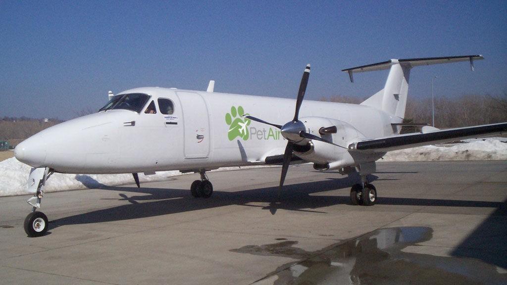 Pet Airways fly dyr