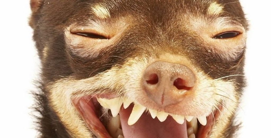 HUNDEGALSKAP: Mange hunder får mer omsorg og oppmerksomhet enn mennesker.