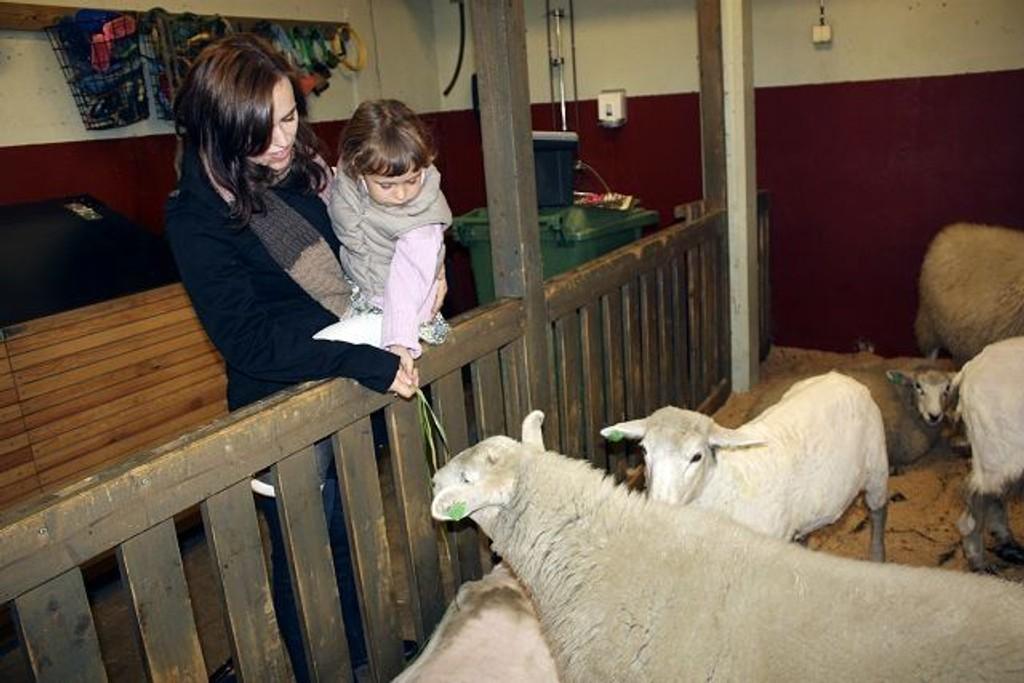 Kirvil Bjerkeseth (3,5) og mamma Katrin Kjartansdóttir klappet sauene som egentlig ikke var så skumle.
