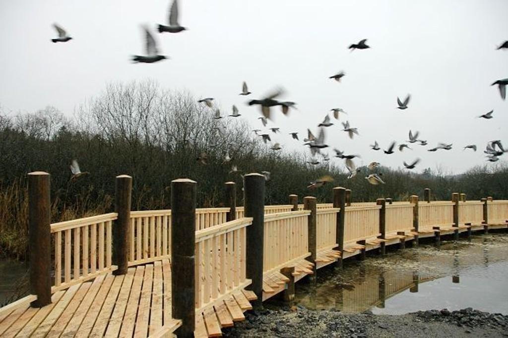 Fuglene venner seg nok snart til den nye gangbroen ved Østensjøvannet. Foto: Nina Schyberg Olsen