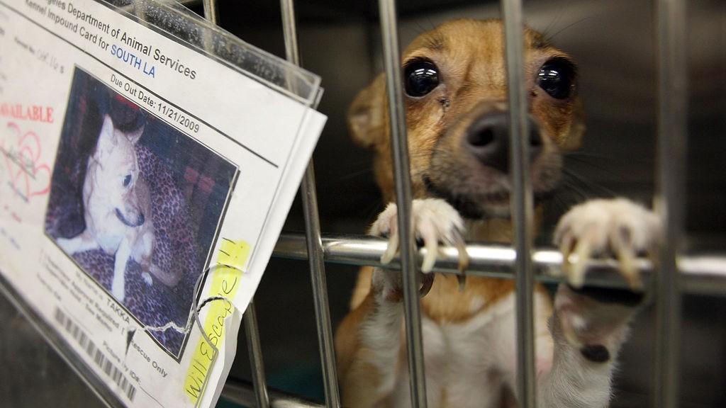 FORLATT: Mange går lei både hunden og veterinærregningene. Når motehundene blir umdoderne ender mange slik.