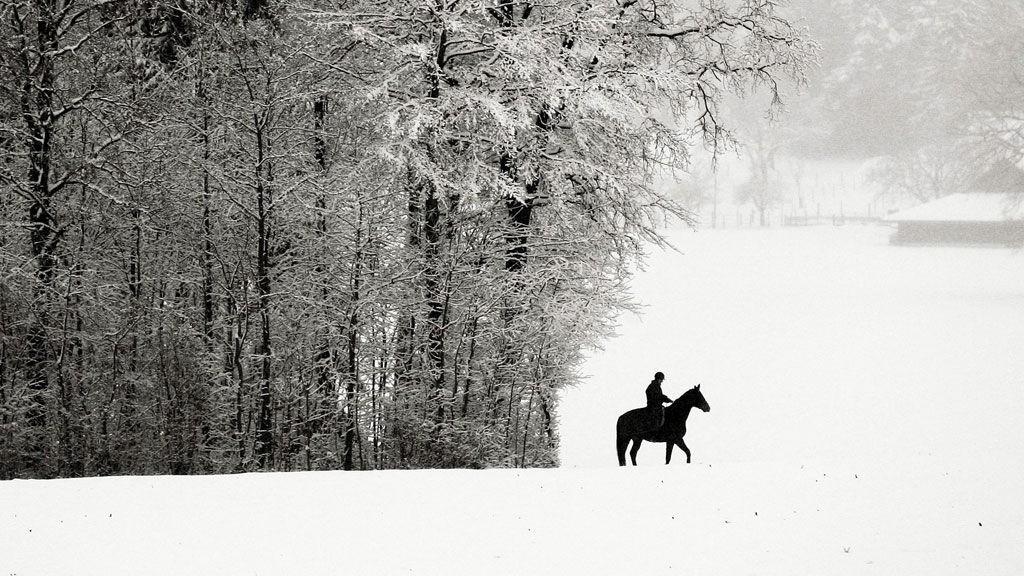 Hest er best.