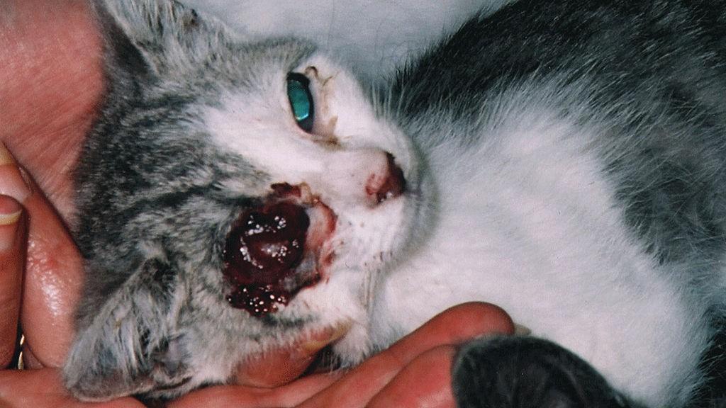 dyrebeskyttelsen haugesund hund