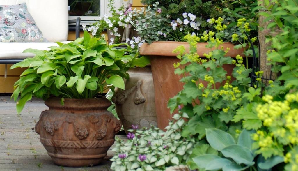 Mange deler opp hagen i forskjellige soner med litt gress her og en samling med krukker der. Rundt omkring anlegges jordlapper, som gjerne er bygd opp med avsatser av stein eller treverk.