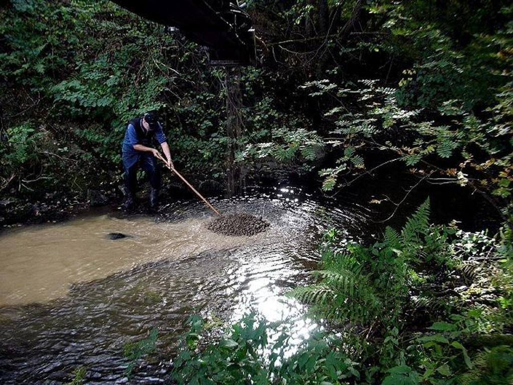 Hjalmar Eide, Miljøprosjekt Ljanselva, arbeider med å fordele gytegrus nede i elva i Liadalen med sikte på å bedre gyteforholdene.