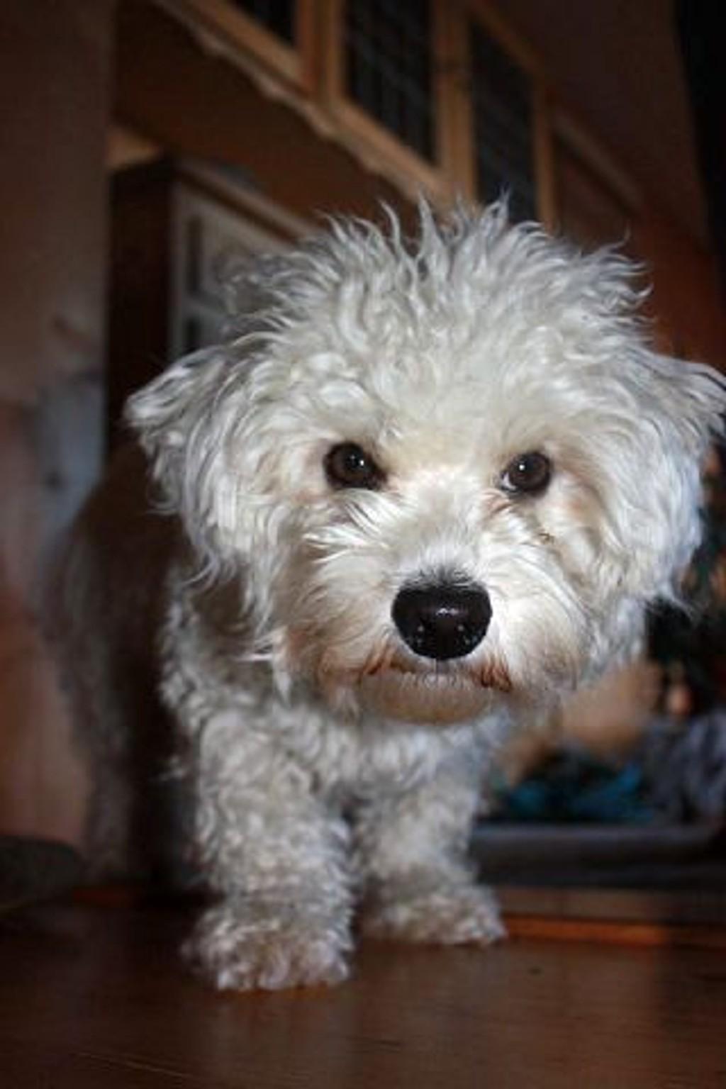 Stewie har vært savnet siden 28. desember.