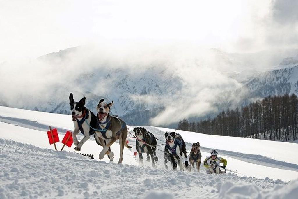 Marte og hundene i aksjon - torsdag (06.01.) reiser familien og 10 hunder til Italia og Alpen-Trail. Foto: Privat