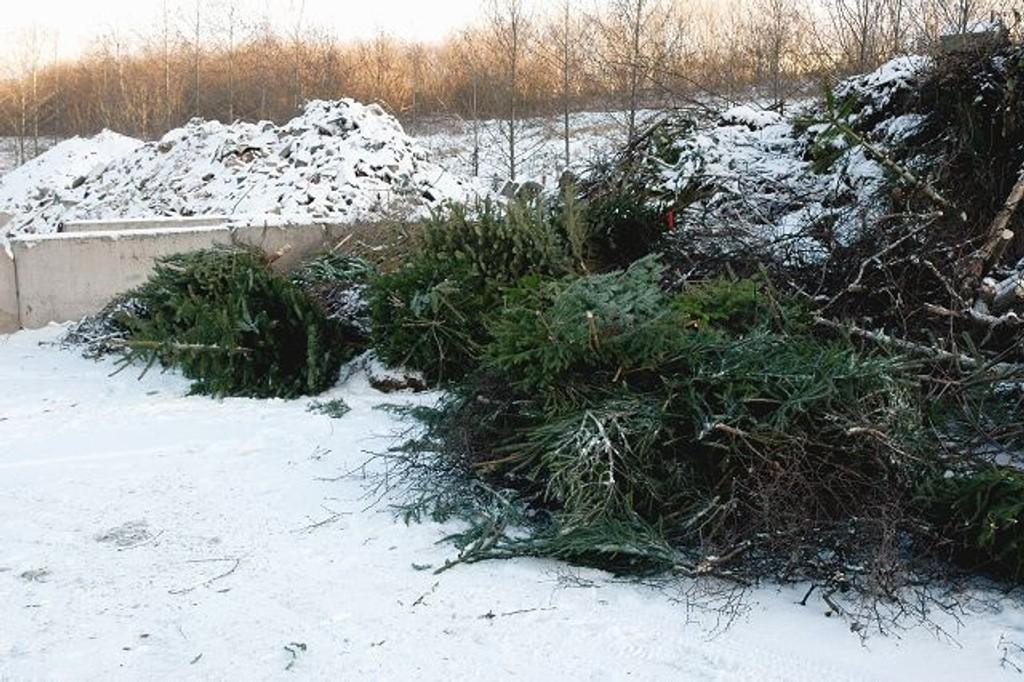 Andre uken i januar henter Renovasjonsetaten treet ditt. Eller du kan levere selv.