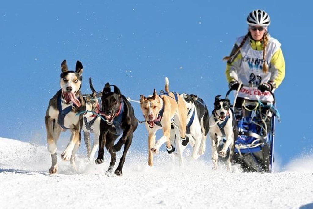 Marte Heilemann og hundene fra Maridalen vant Alpen-Trail - i de sveitsiske og italienske alper - i mellomdistanseklassen.