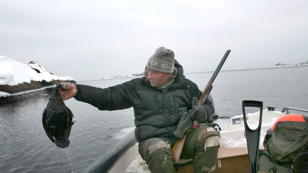 Skyter oljetilsølt fugl: Ulf Høyer-Jonassen har i to dager vært ute i båt i Viksfjord-området og skutt ærfugl som har vært tilgriset av olje etter det grunnstøtte skipet «Godafoss». Dette er ingen hyggelig jakt. Forholdene er mye verre enn jeg hadde forestilt meg, sier han.