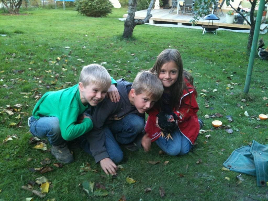 FJÆRFUNN: Henrik, Nikolai og Vildemed høna de fant på skoleveien.
