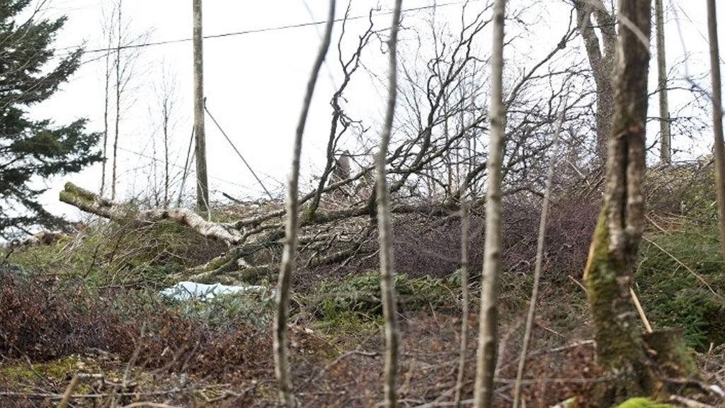 Dødsulykken skjedde i forbindelse med felling av trær.
