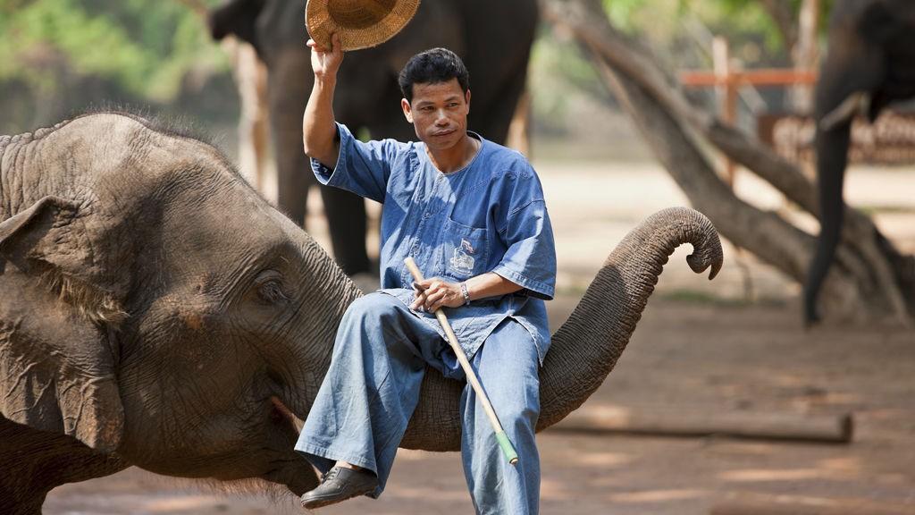 Utenfor Lamapang kan du kanskje bli elefantvisker.
