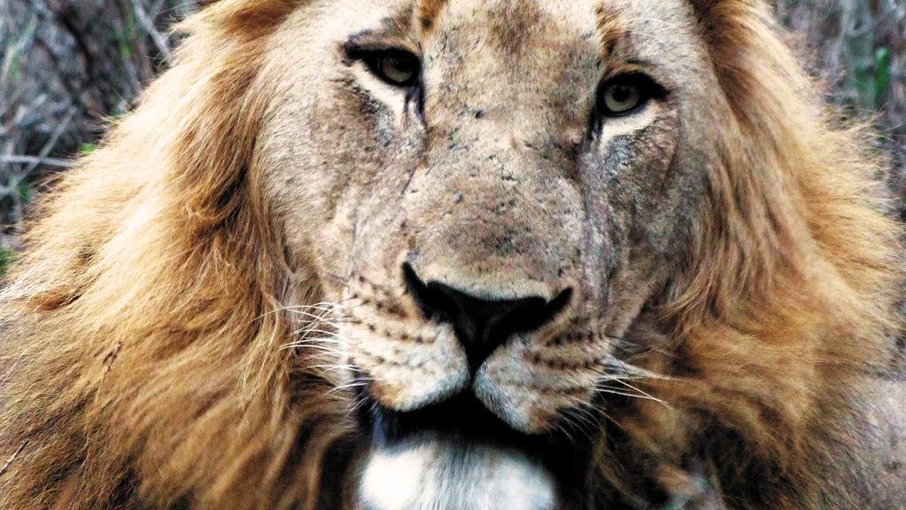 Safari er et minne for livet.