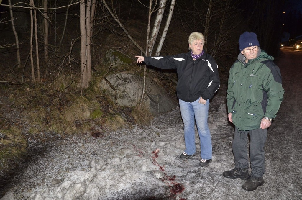 RYSTET: Olav og Berit Hauggård er rystet over at Viltnemda brukte tre skudd på å avlive et rådyr. – Når et vilt dyr blir påkjørt kan det få indre skader, derfor er det beste å avlive det med en gang, sier ekteparet. Her er de på ulykkesstedet i Hellerudveien.