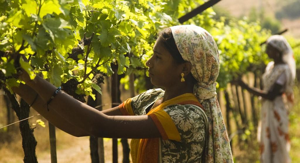 Vinrankene stelles med omsorg av søstrene Renuka og Nanda Ganpathmunday.