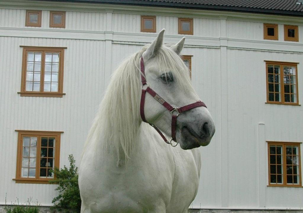 HEST: Om denne hesten var blant abildsørømlingene vites ikke. Heldigvis endte det godt.