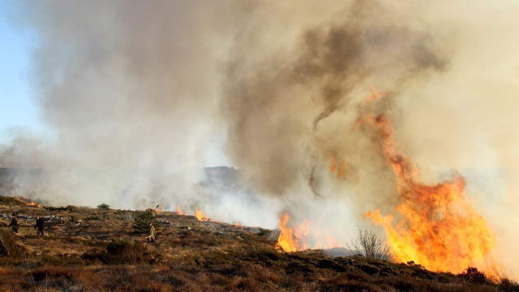 Brannmannskaper prøver å få kontroll over en større gressbrann på Karmøy i Rogaland lørdag ettermiddag.