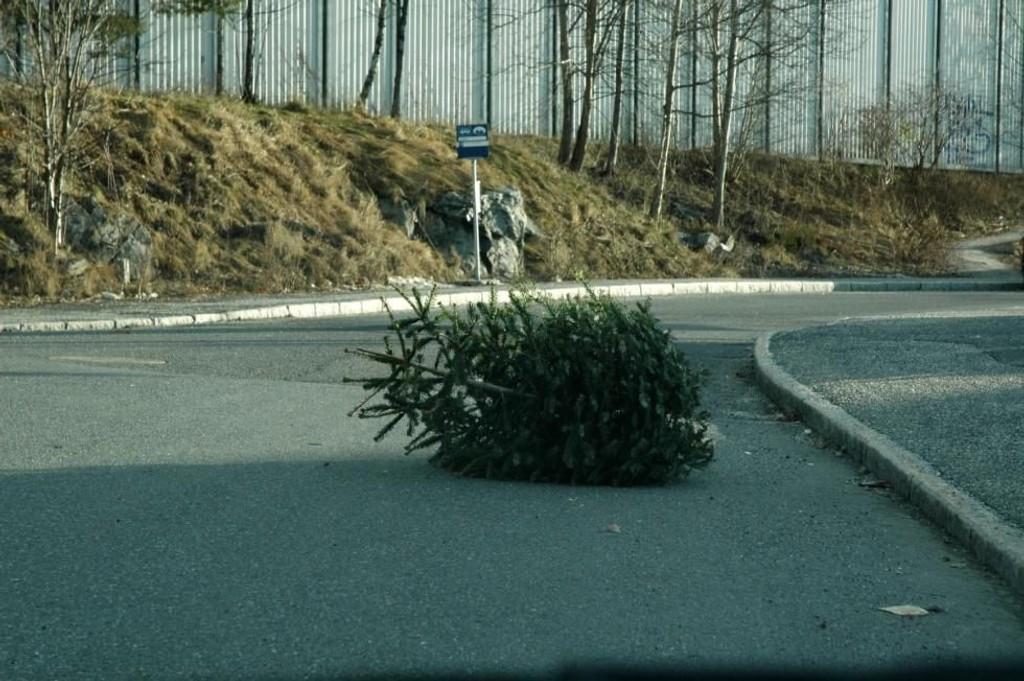 I uke 2 kan du bli kvitt det gamle treet. Og det nesten rett utenfor døra di.