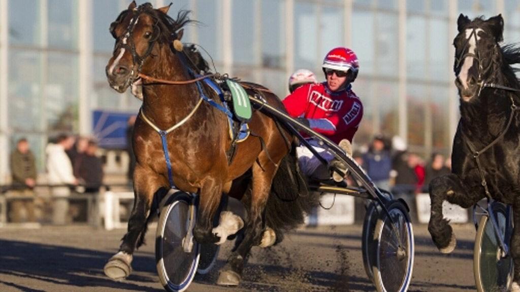 Neslands Loke blir storfavoritt på Forus i kveld. Foto: hesteguiden.com