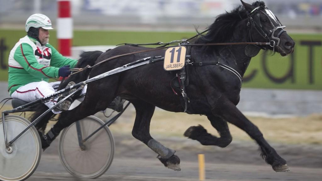 Hafell Prinsen - her med treneren Eivind Gravdal - er i ferd med å stabilisere seg. Foto: hesteguiden.com