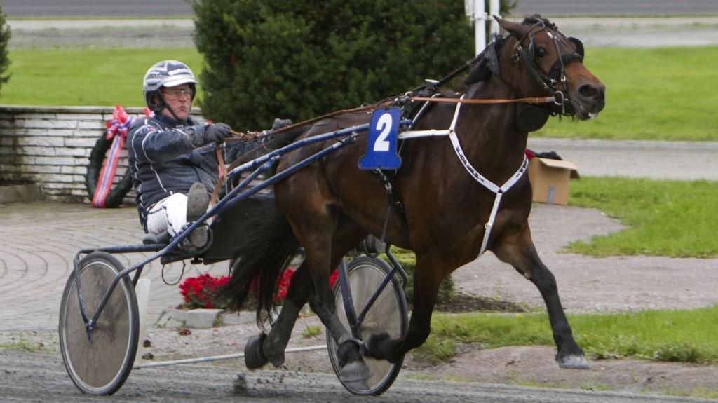 Eldpeppi og Øystein Tjomsland er vår bankerekvipasje på Sørlandet i kveld. Foto: hesteguiden.com