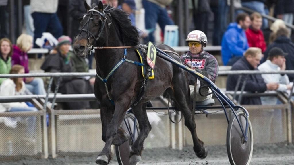 Ulf Ohlsson kjører vår alenestrek på Umåker i kveld. Foto: hesteguiden.com