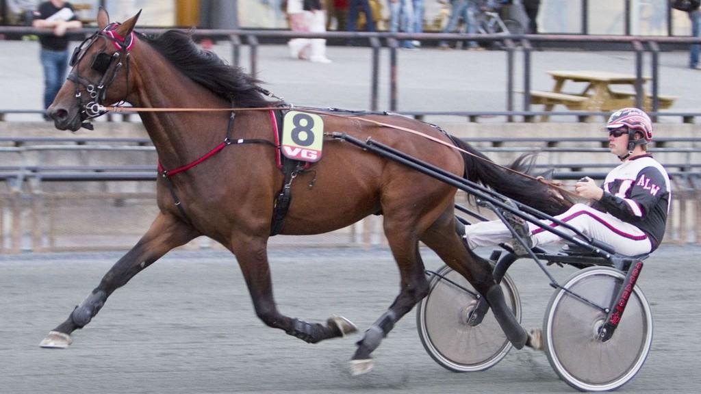 Higher Power fra Borkenes i Troms - her med sin oppdretter Anders L Wolden i vognen - starter i V4-2 i Boden. Foto: hesteguiden.com.
