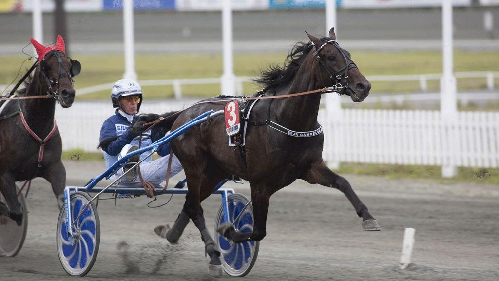 Sejr Gammelsbæk og Frode Hamre er en av vinnerkandidatene i V75-7 på Momarken lørdag.