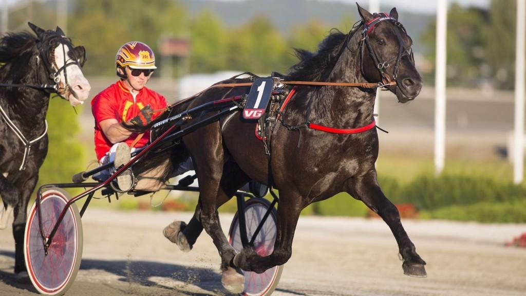 Topptraveren Hellin Faxen drar til Sverige for å avlegge årsdebut. Foto: hesteguiden.com