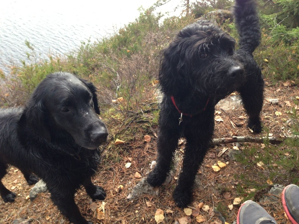 Fra 1. april til 20. august skal de firbeinte holdes i bånd. Båndtvangen er landsomfattende. I Oslo gjelder den både i Marka og i byen. Men det finnes ti friområder der hunder kan løpe løs hele året.