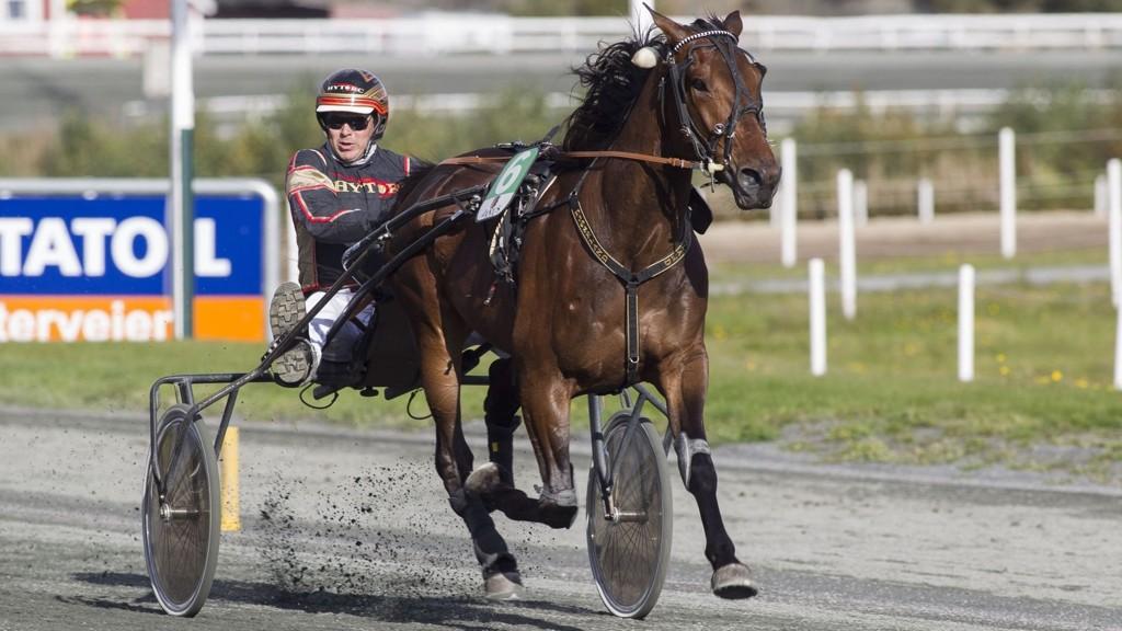 Herecomesthesun gjør sin første sprintstart i karrieren. Foto: hesteguiden.com
