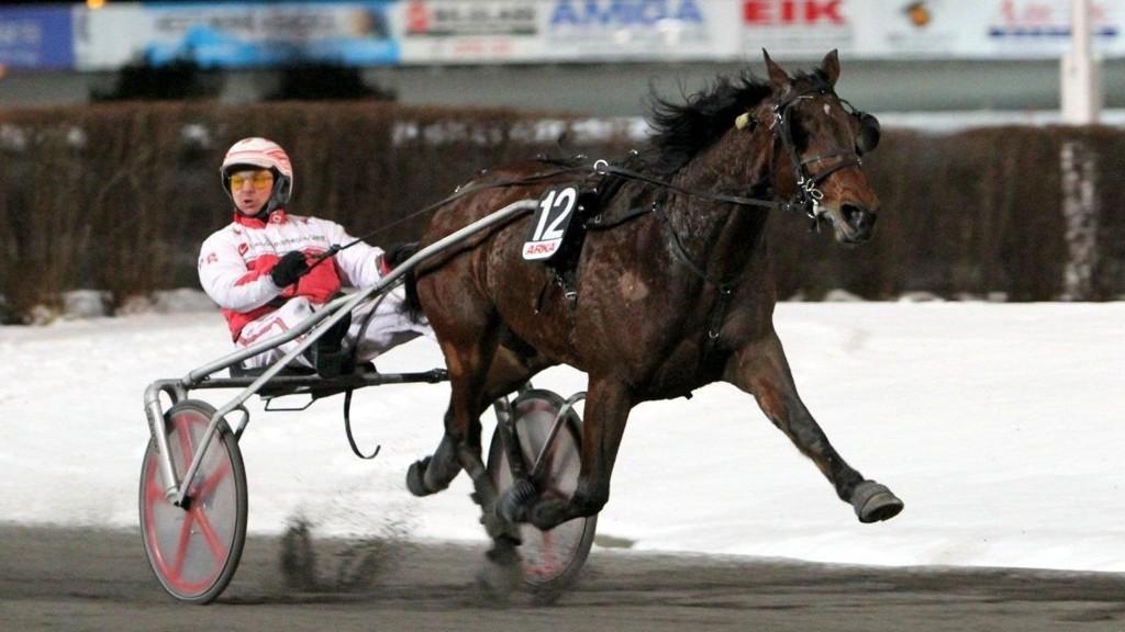 Rex Palema spratt unna til seier sist han gjestet Bergen. Nå har han vinnersjanse igjen, mens kjørende Pål Buer fort kan bli dobbelvinner. Foto: Åge Liland/Bergen Travpark.