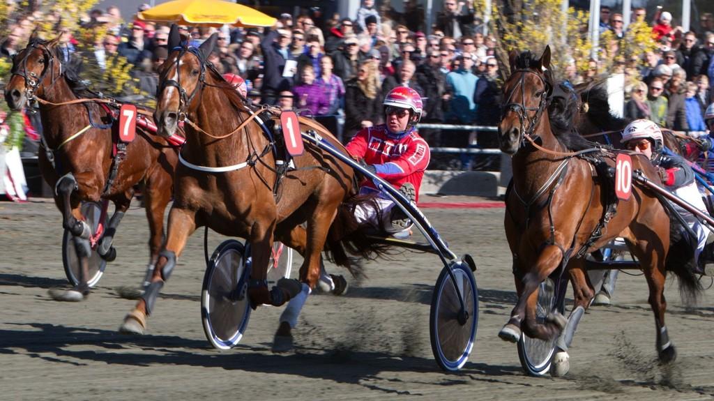 Romarino blir mye betrodd i V5-4. Vi lanserer dog et hett motbud i samme løp. Foto Morten Skifjeld/Hesteguiden.com