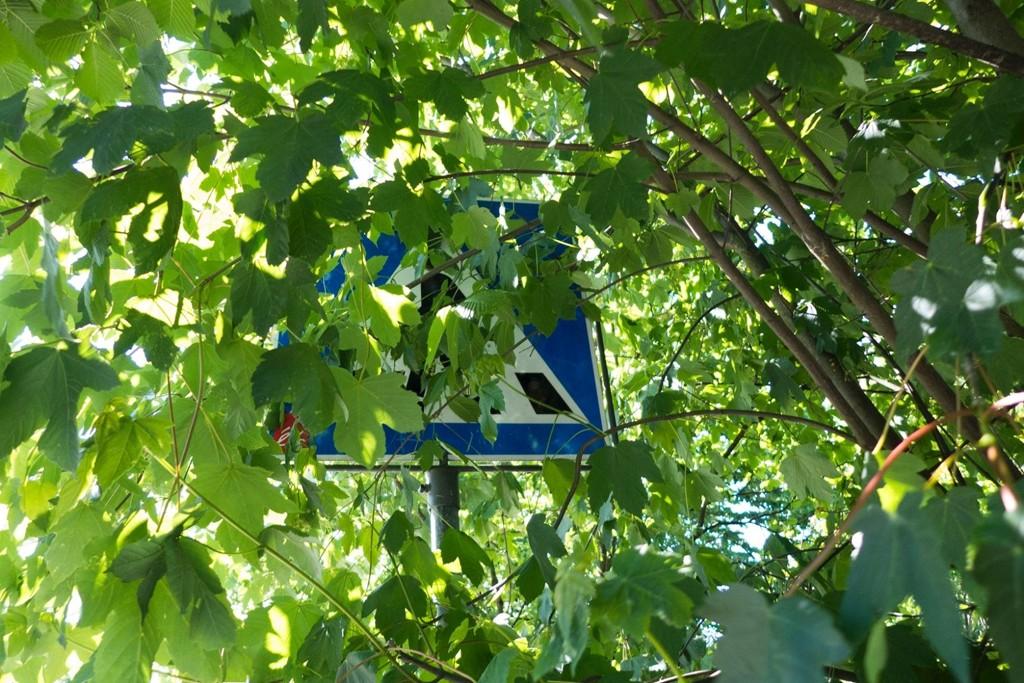 Her kan du så vidt se skiltet som er skjult bak trærne.
