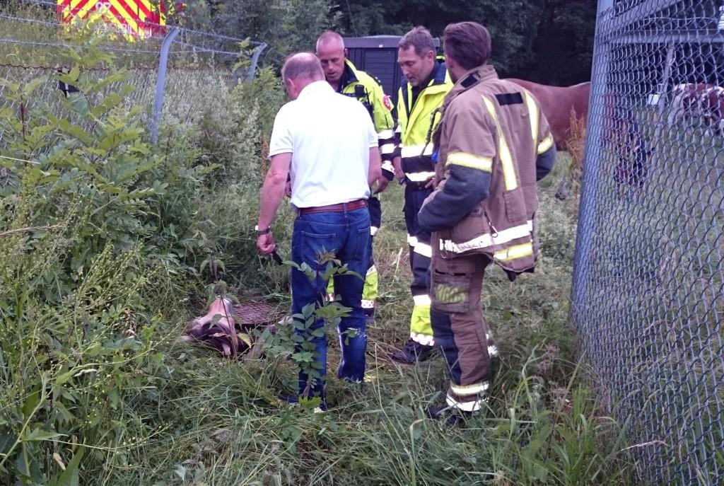 DØDE: Brannvesenet og veterinær rykket ut da det kom melding om at hesten var funnet. Dessverre døde hesten før den kunne bli reddet opp.