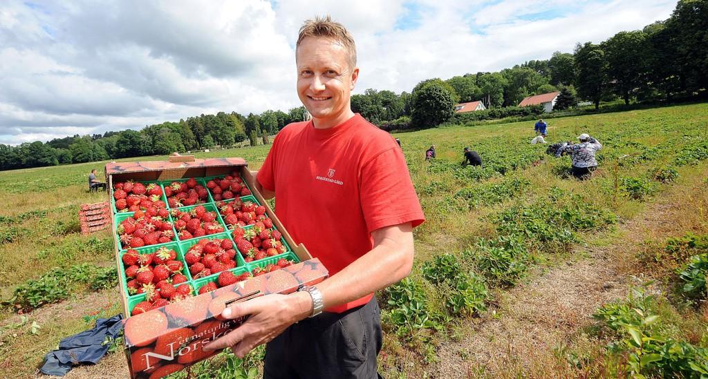 FERSKE BÆR: Petter Borgestad er storfornøyd med årets jordbærsesong.