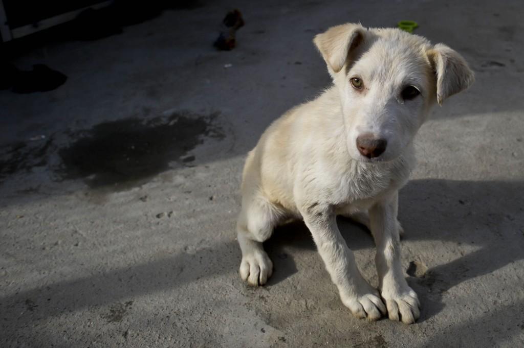 LIKER DÅRLIG: I sitt reisemagasin skrev Apollo at de reisende kunne adoptere hunder fra Kreta. Mattilsynet ønsker ikke smitte fra dyr fra utlandet, og liker dårlig at Apollo har opplyst om dette.