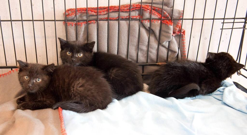 DUMPET: Disse kattungene ble funnet sammen med moren sin, tilsynelatende uten eiere.