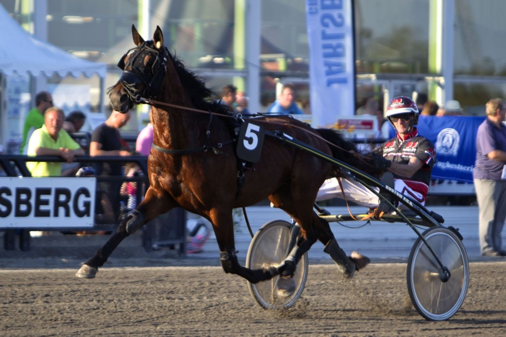 Gunnar Austevoll, og Seven Cru blir vår klare banker i V4-spillet fra Årjäng. Foto Morten Skifjeld/Hesteguiden.com