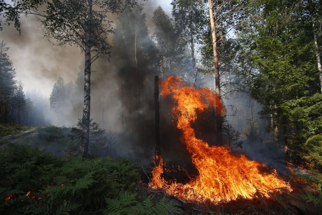 En skogbrann har siden torsdag herjet Sala kommune i Västmanland i Sverige. 110-sentralene for innlandet og i Trøndelag ble søndag nedringt av personer som tror det brenner i Norge. Foto: Fredrik Perssonl / TT / NTB scanpix