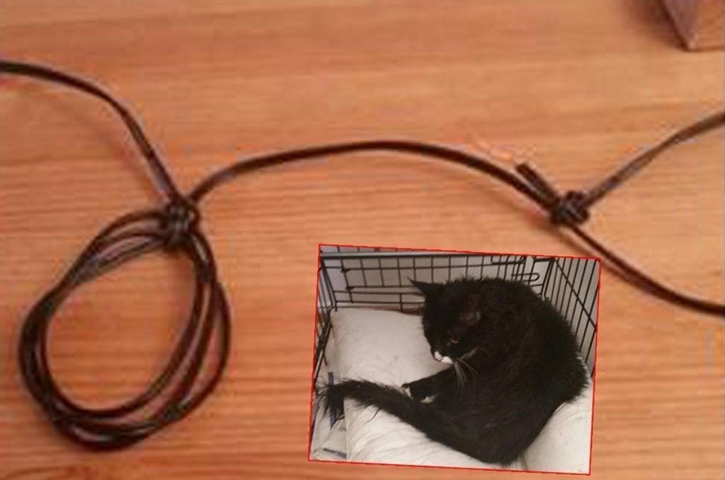 Katten Buster kom hjem med denne ledningen knyttet rundt halsen.