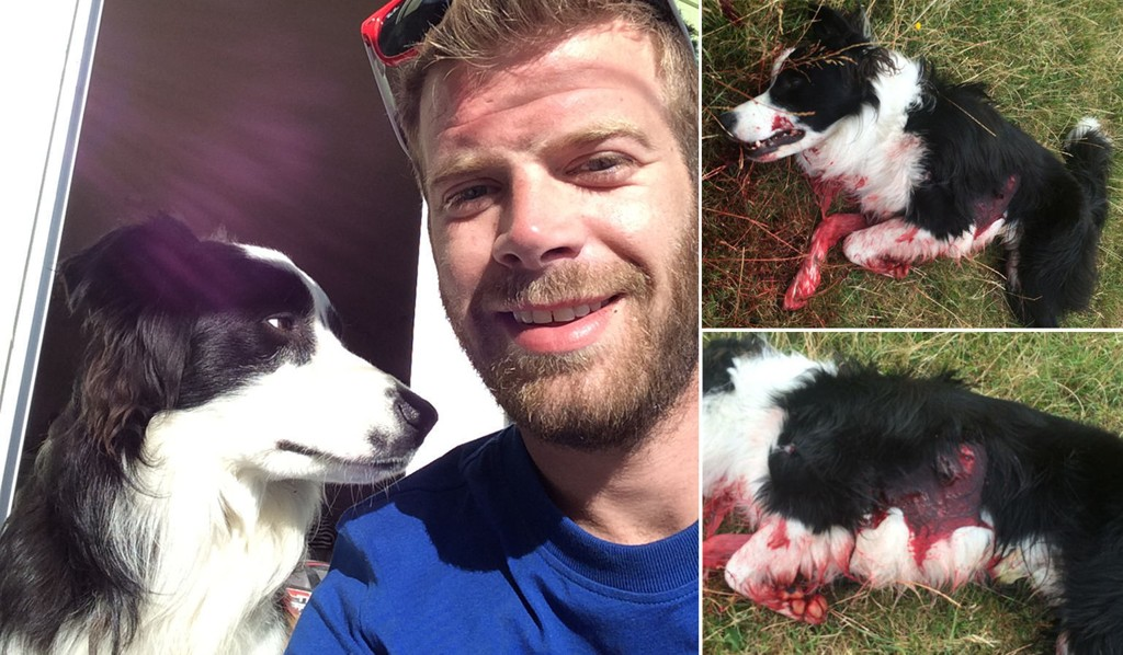 HUNDEN DREPT: Ole Stangelands 13 måneder gamle hund ble skutt og drept av gårdeier Egil Hellestø med to hagleskudd, fordi gårdeieren mener hunden jaget sauene hans.