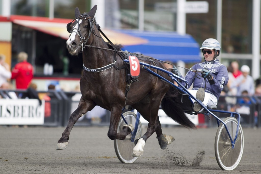 Philip Rex med sin trener Øystein Tjomsland i sulkyen.